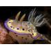Irisblenden V2 Snoot für Subtronic Blitze