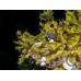 Irisblenden Snoot V2 für Sea & Sea Blitze